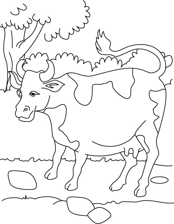 dairy cows coloring pages - photo#33