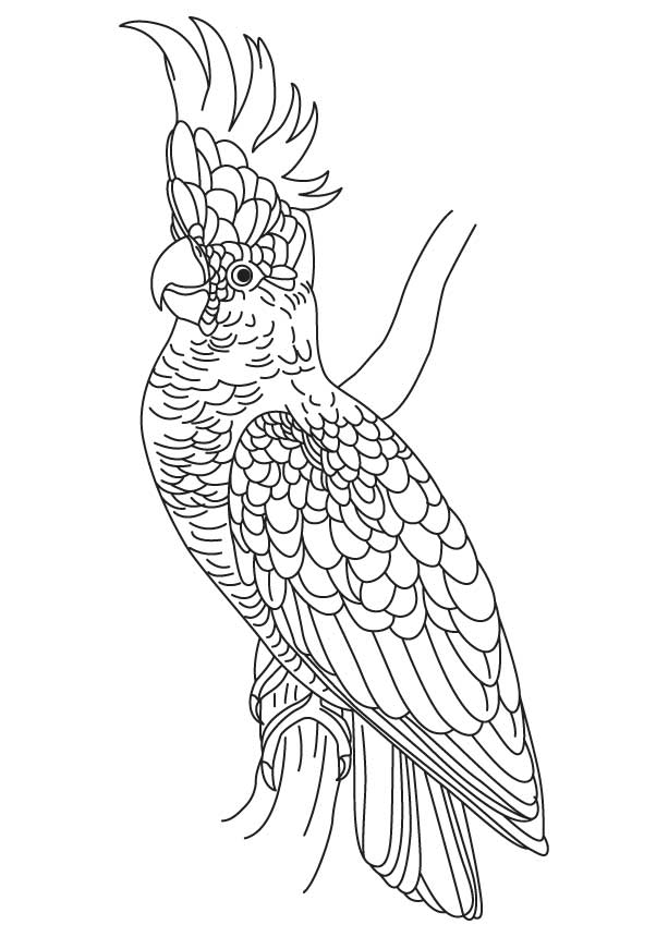 free cockatoo coloring pages - photo#7