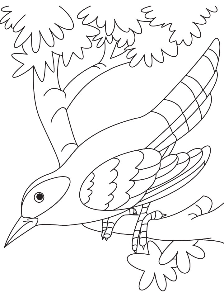 A Cuckoo Bird Sitting On Branch Coloring Page