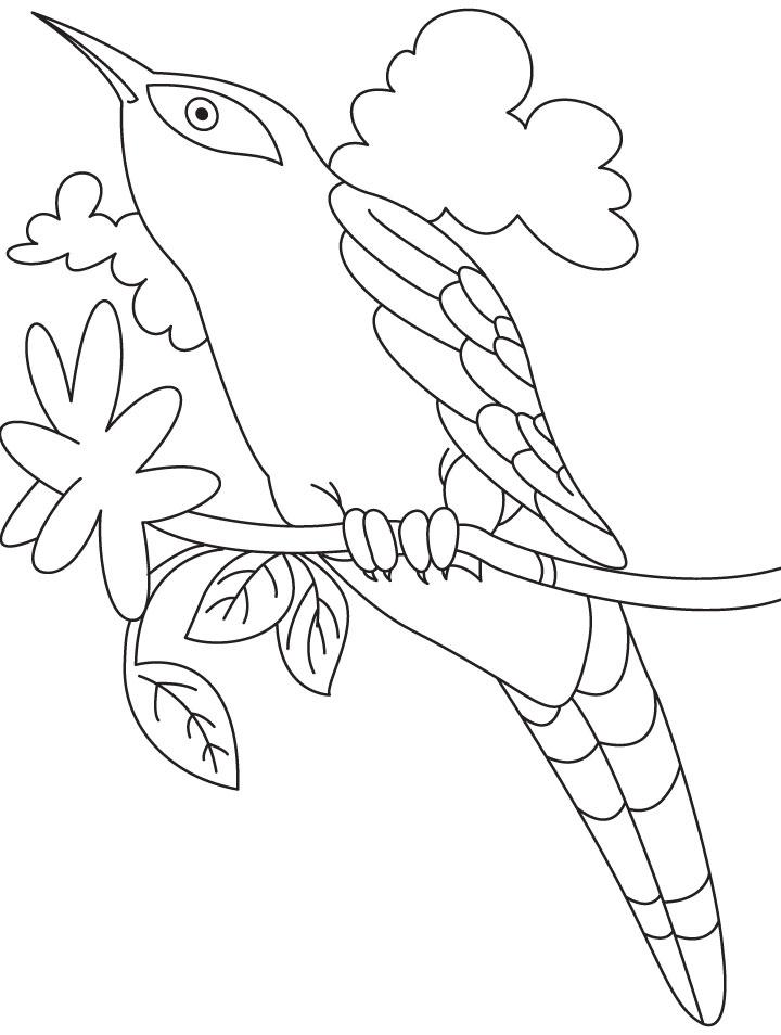 Cuckoo bird looking at sky coloring page