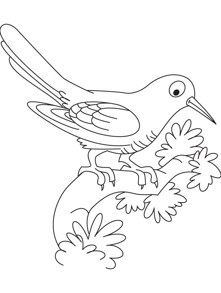 Resting Cuckoo Bird Coloring Page