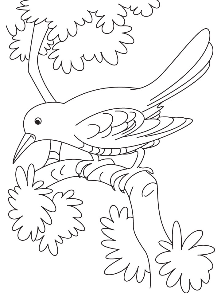 sad cuckoo bird sitting on a branch coloring page