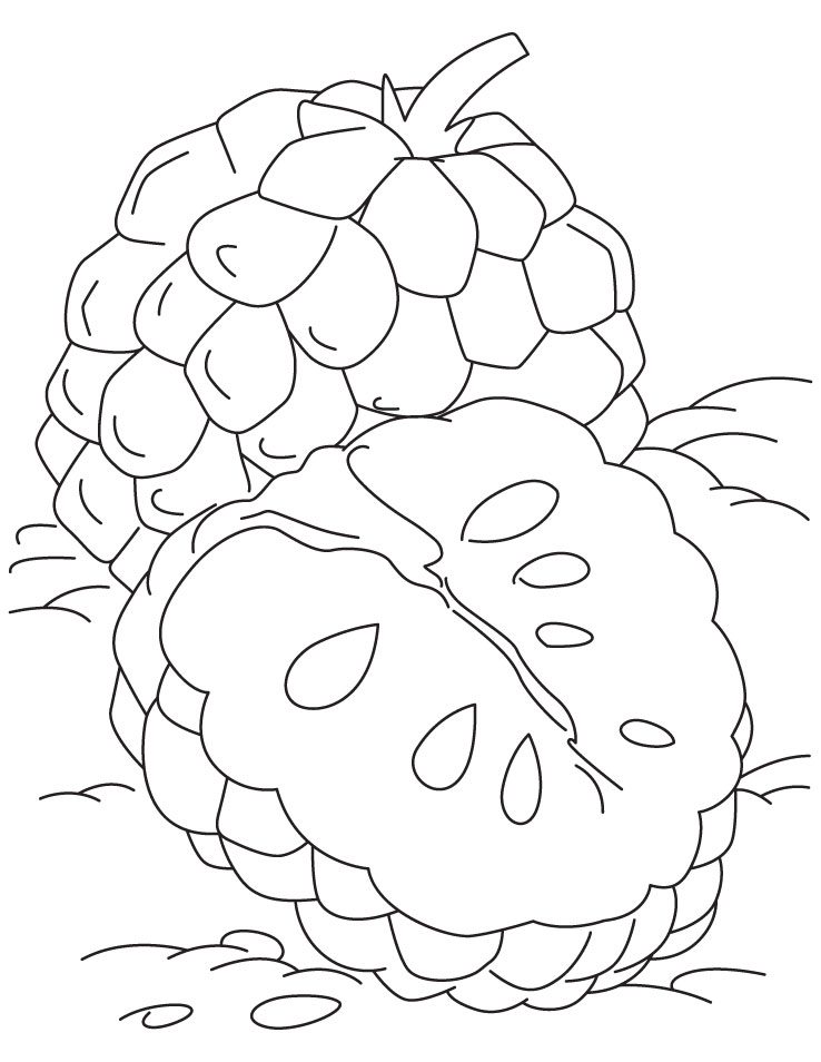 Tropical Custard Apple Coloring Pages