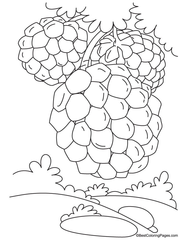 Custard Apple On Tree Coloring Pages