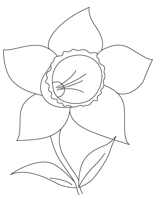 Daffodil Bulb Coloring Page