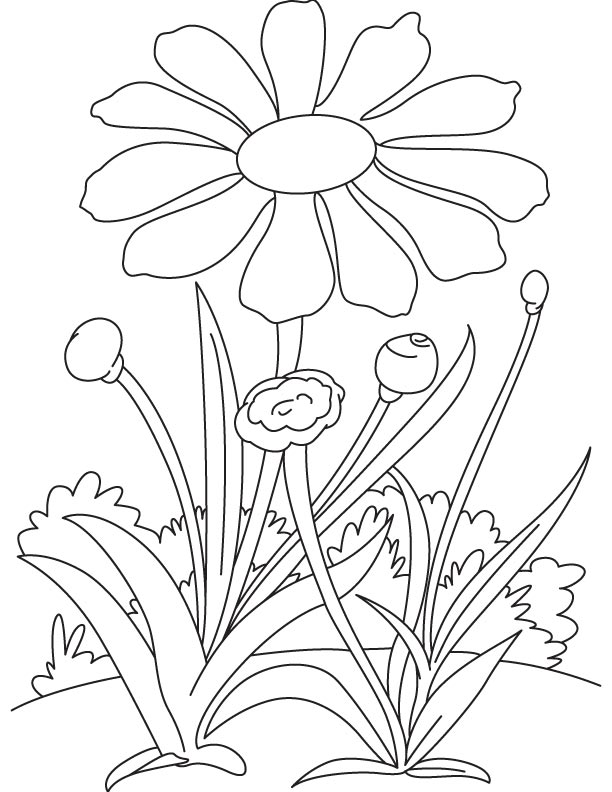 Daisy in the garden coloring page