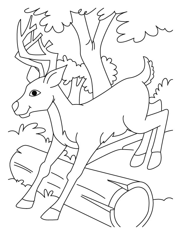 jumping deer coloring pages