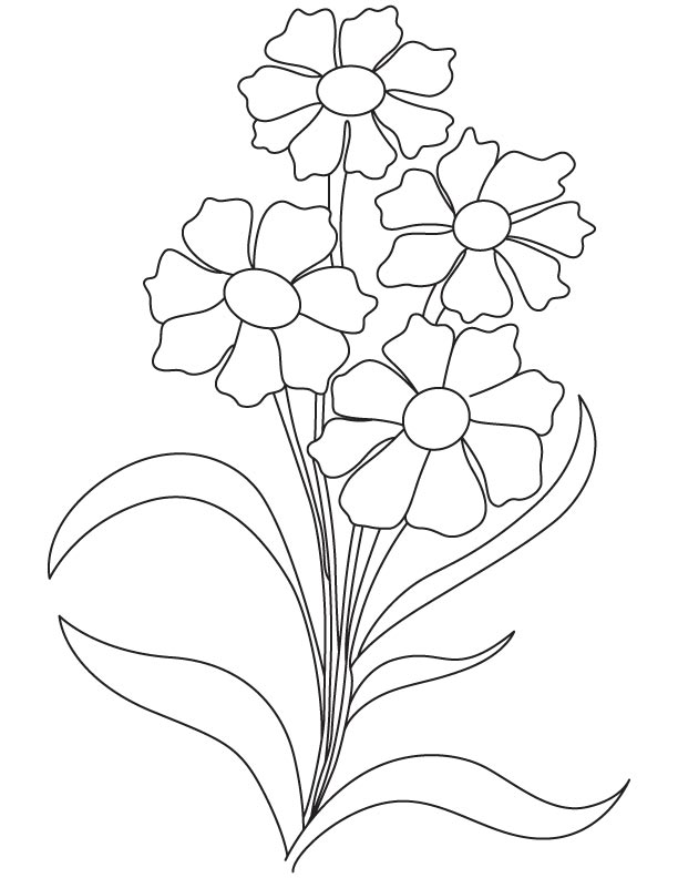 Dianthus flower coloring page