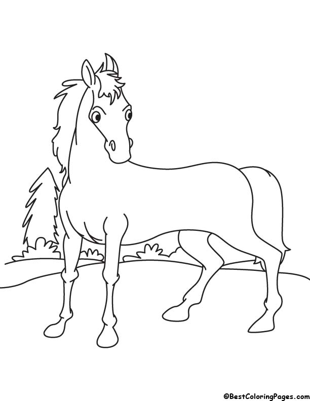 Domesticate horse coloring page
