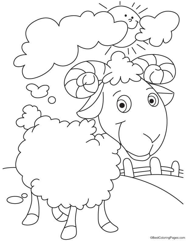 Domesticated sheep coloring page