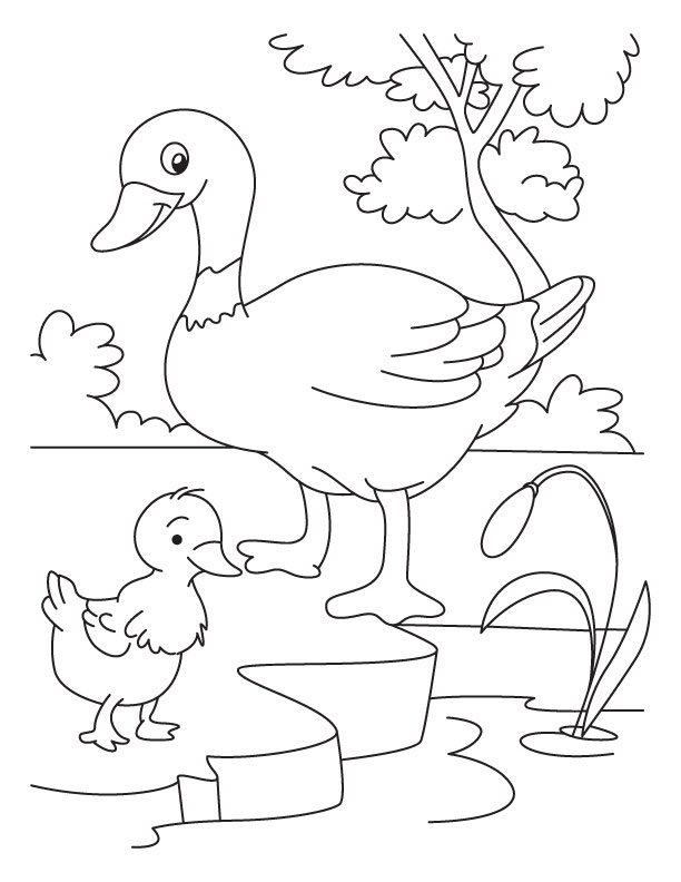 Duck And Duckling Coloring Page