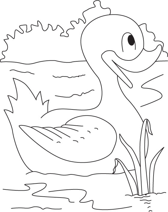 Me the swimming champion duck coloring pages download for Duck hunting coloring pages