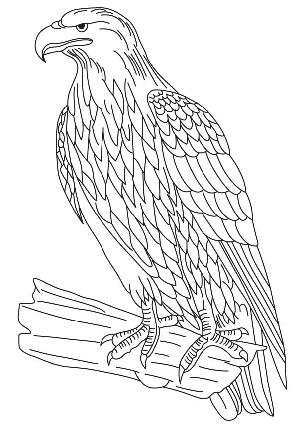 Printable colouring pages with birds, parrot to color | 860x613