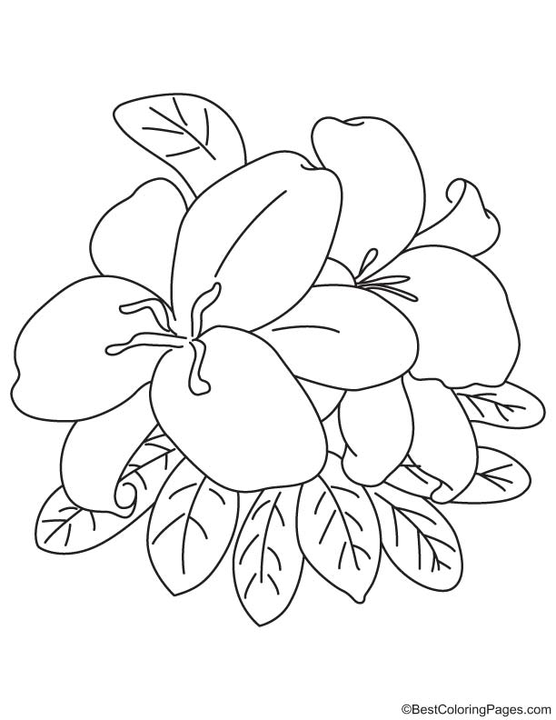 Coloring Pages Easter Lily