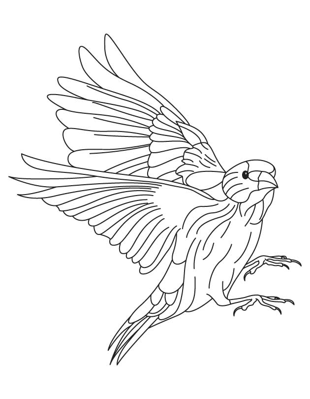 European goldfinch coloring page