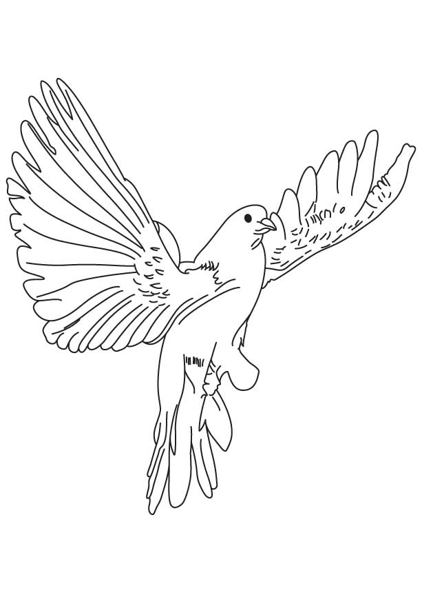 Fast Flying Dove Coloring Page Download Free Fast Flying