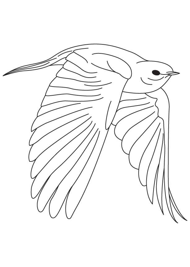 Fearless bluebird coloring page download free fearless for Eastern bluebird coloring page