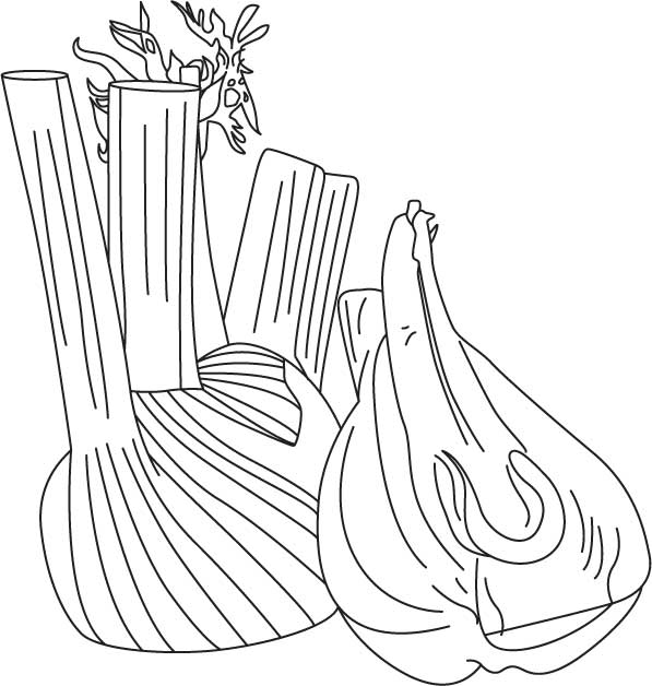 fennel bulb coloring pages