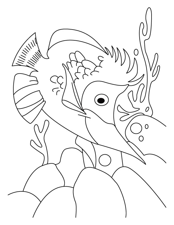 Fish-jalpari coloring page