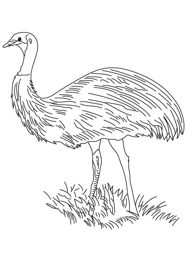 Flightless bird coloring page