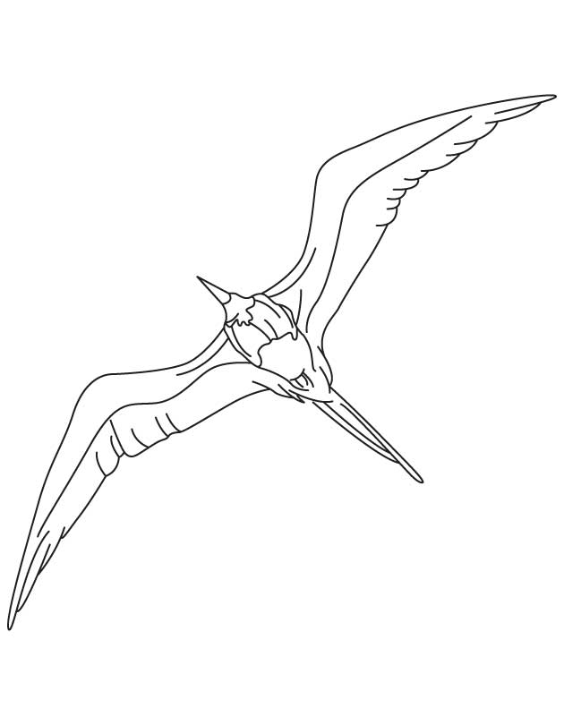 Fly High Frigatebird Coloring Page Download Free Fly