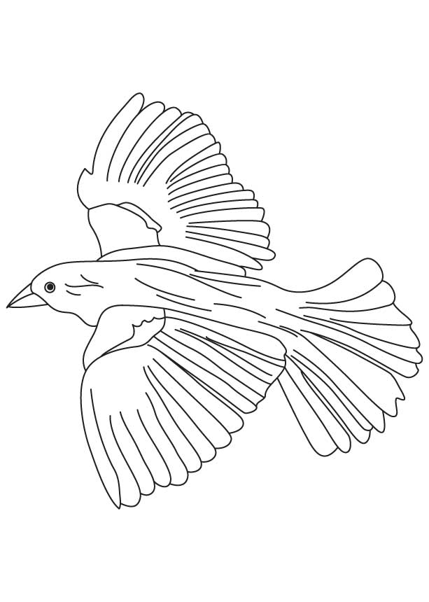 Flying blackbird coloring page Download Free Flying blackbird