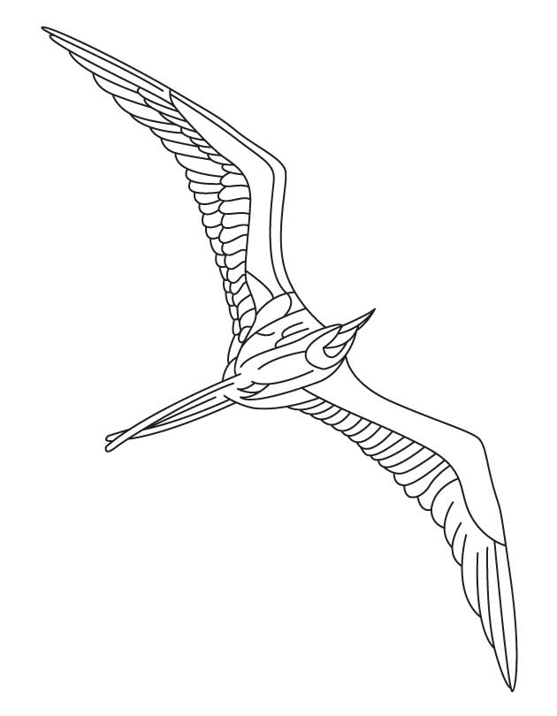 Flying Seabird Coloring Page