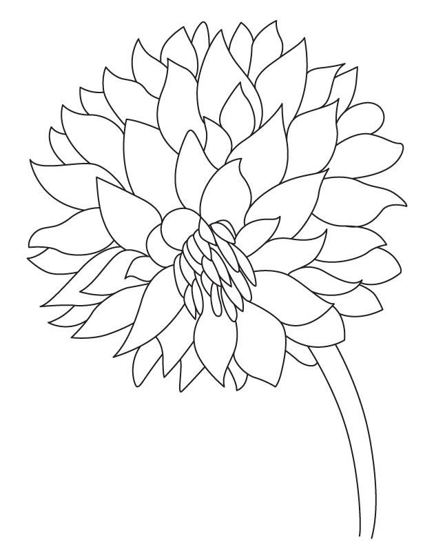 Garden flower dahlia coloring page