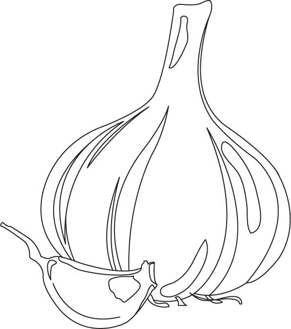 Garlic bulb and clove coloring page