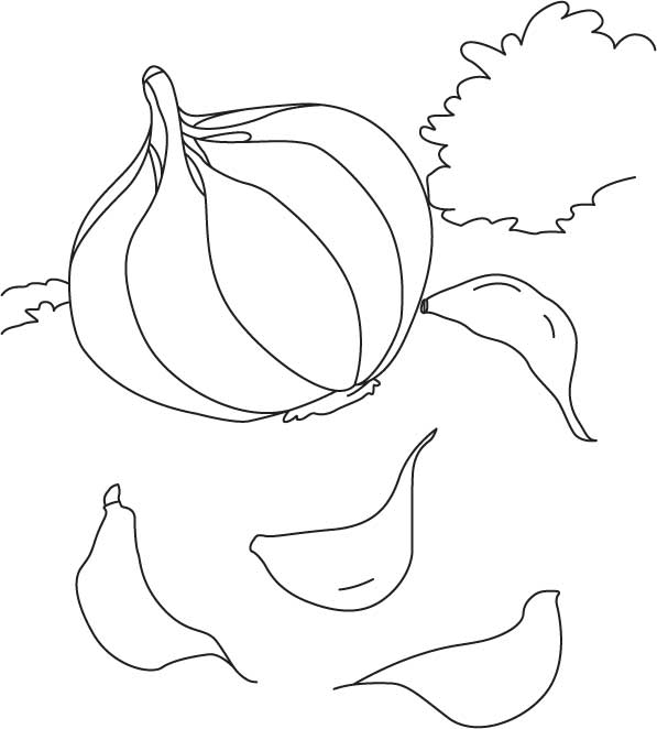 Garlic in field with cloves coloring page