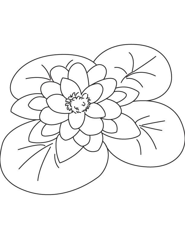 Giant water lily coloring page | Download Free Giant water lily ...