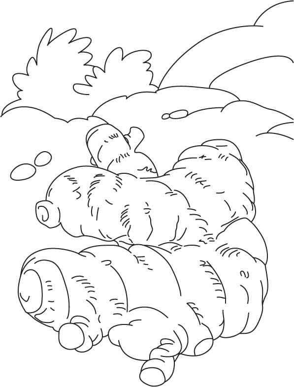 Ginger rhizome coloring page