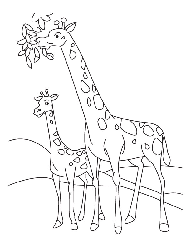 giraffe and calf coloring page