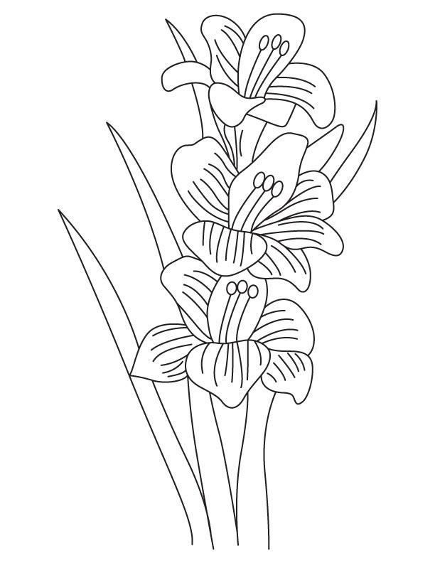 Gladiolus Bulbous Flowering Plant