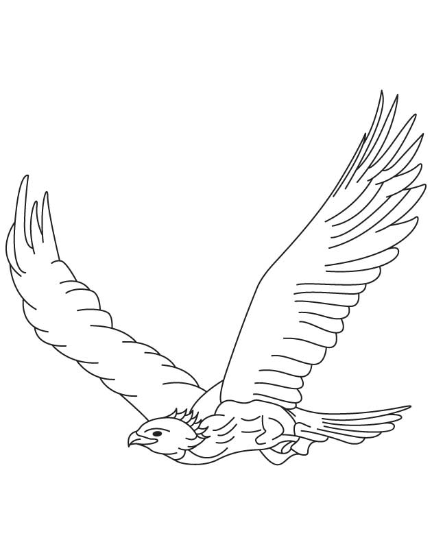 golden eagle in flight coloring page