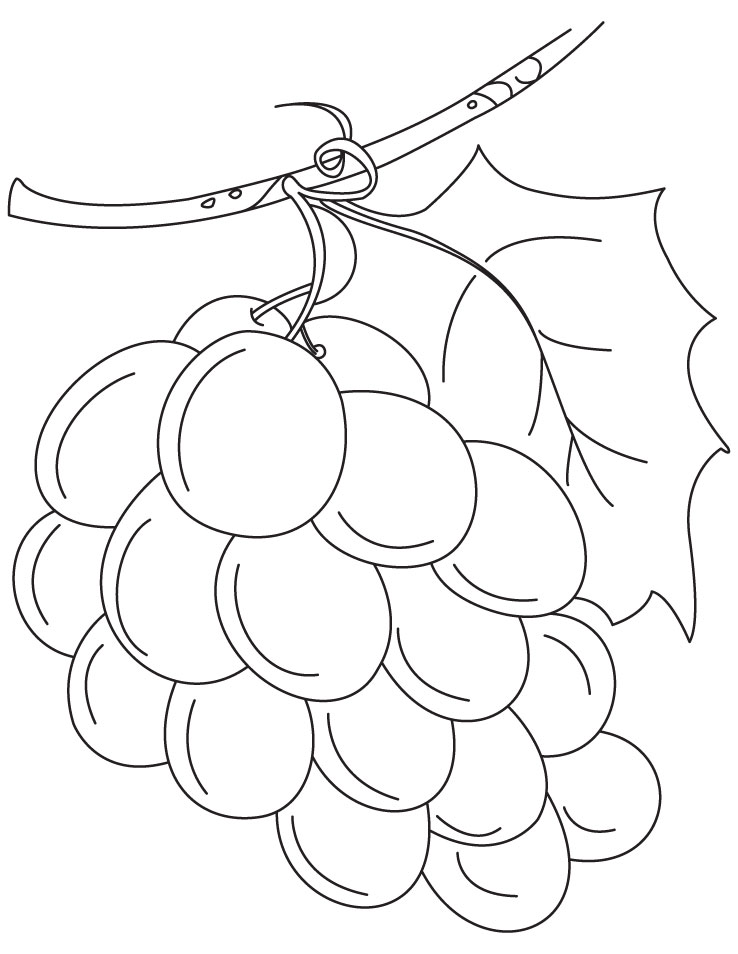 Fresh green grapes coloring pages