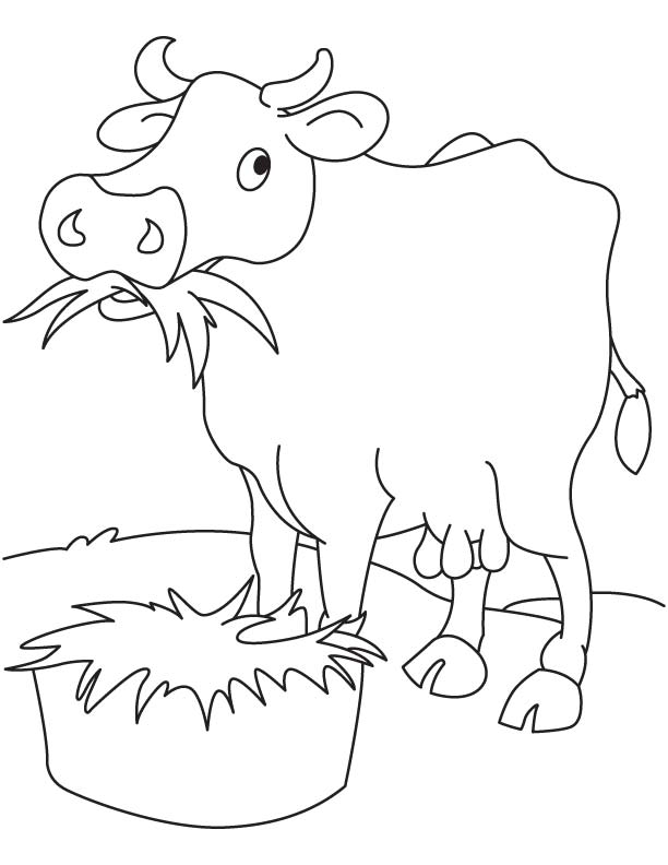 Grass Eating Cow Coloring Page