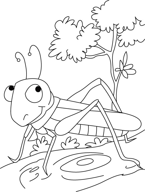 The Show Stopper Grasshopper Coloring Pages