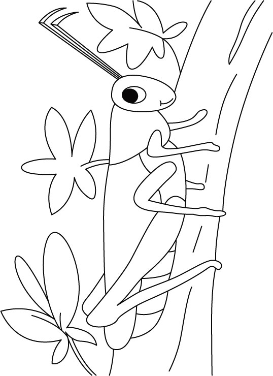 Grasshopper On A Walk Coloring Pages Download Free Grasshopper Coloring Page