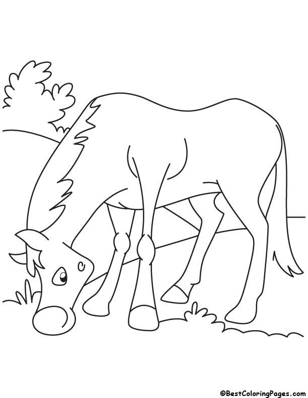 Grazing horse coloring page