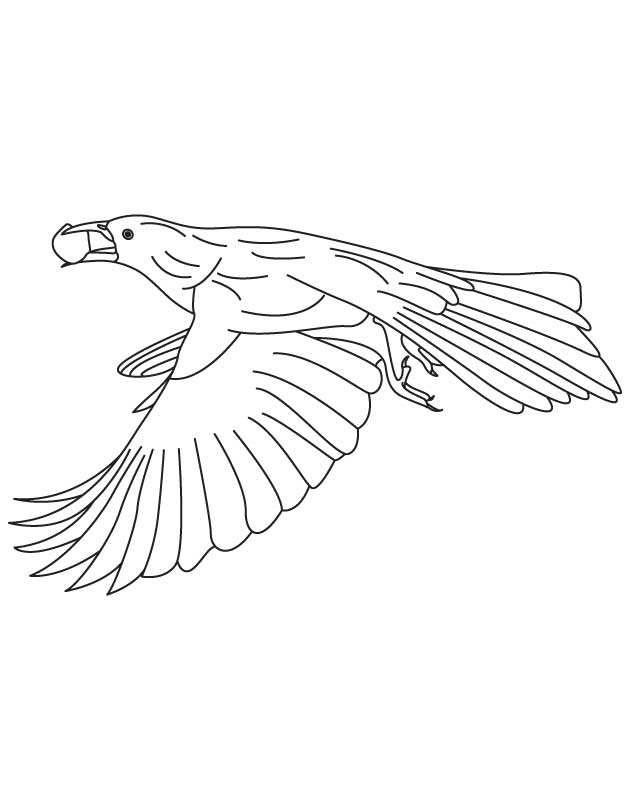 Great tailed grackle coloring page