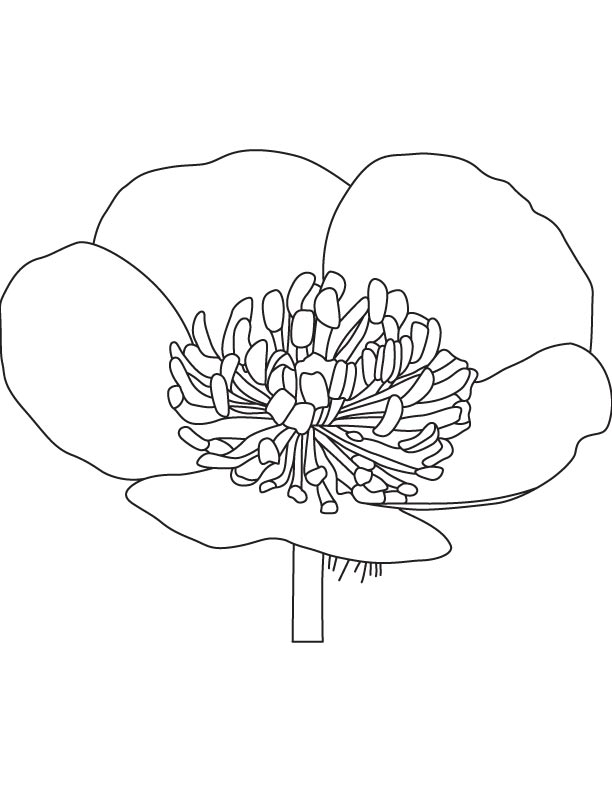 Growing buttercup coloring page
