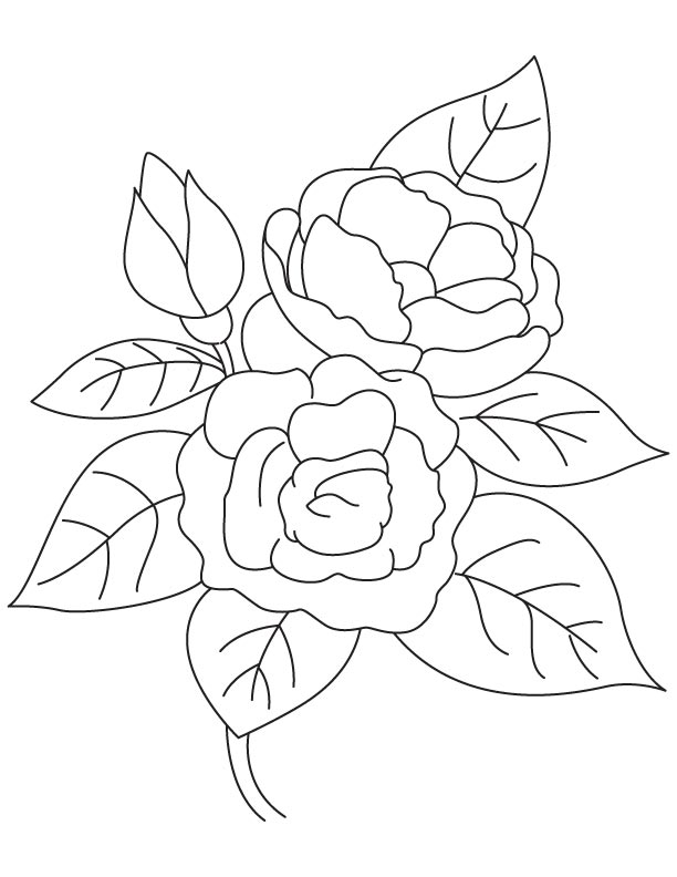 Growing Camellia Coloring Page