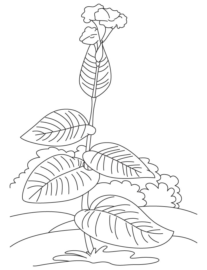 Growing canna coloring page