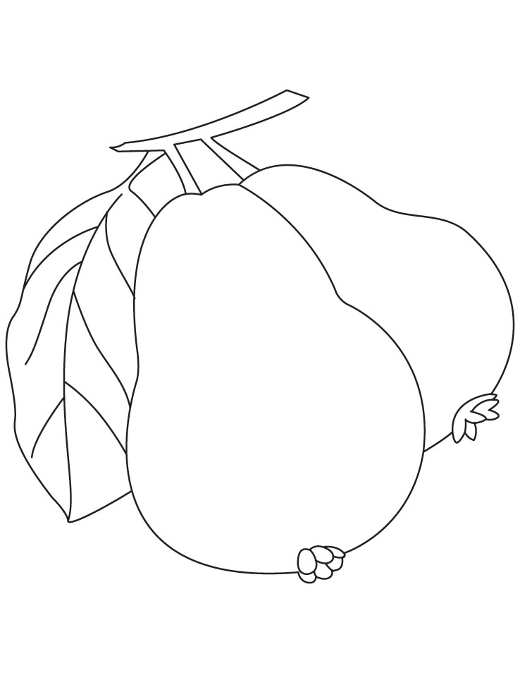 Pine cone coloring pages