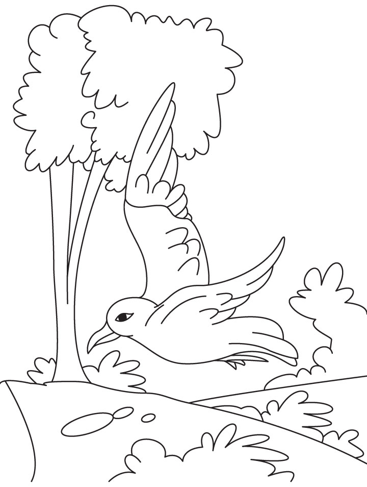 A flying gull coloring page