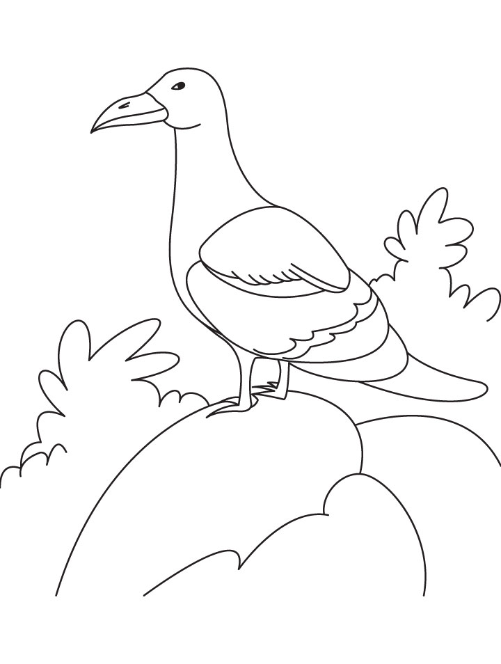 A gull bird is sitting on the rock coloring page