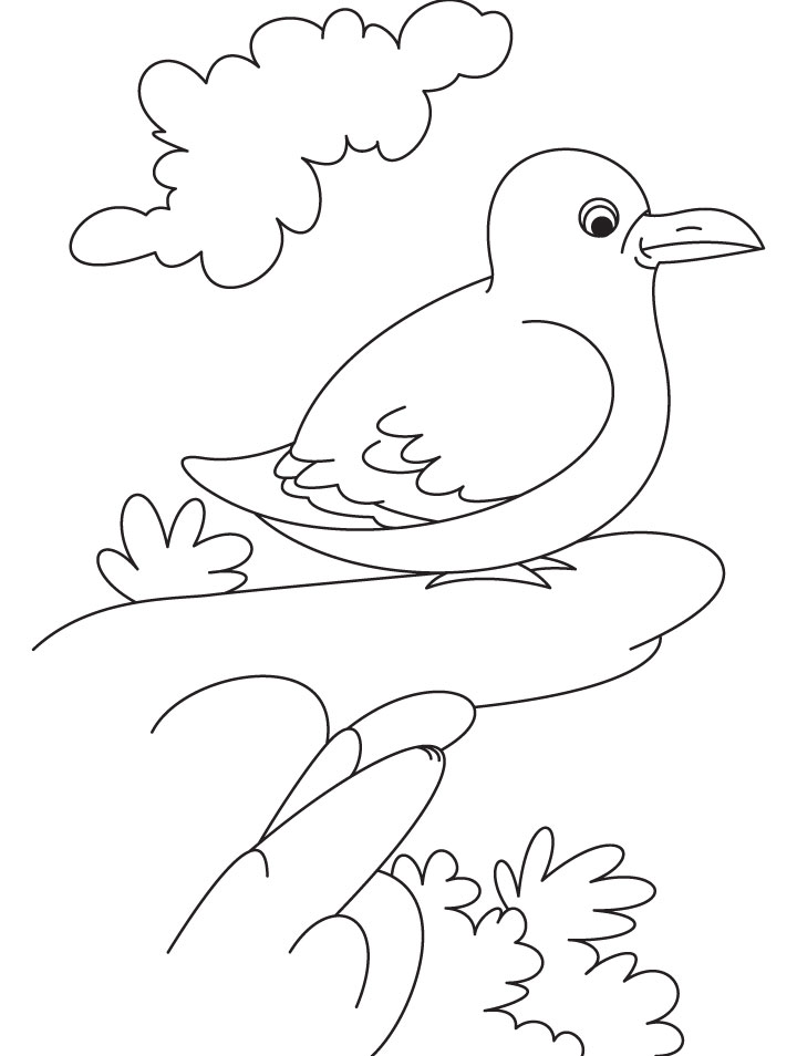 A Smart Gull Bird Coloring Page