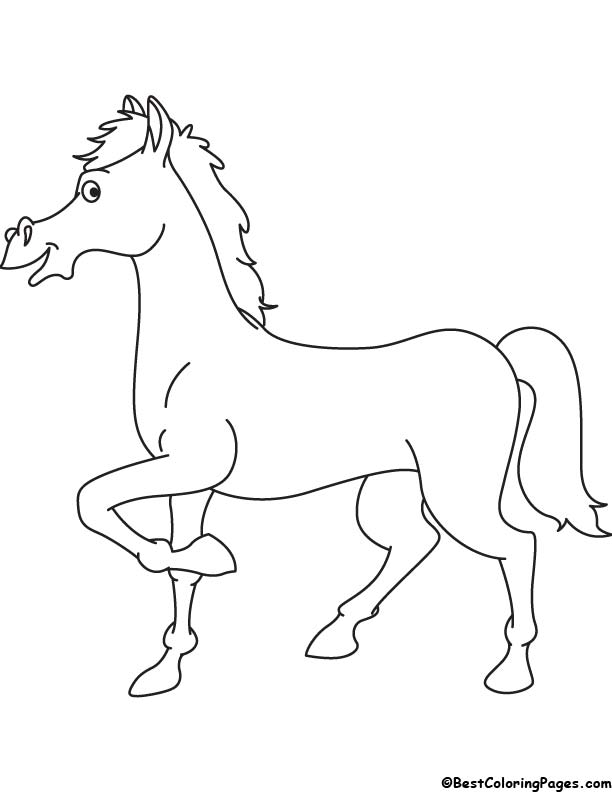 Handsome horse coloring page