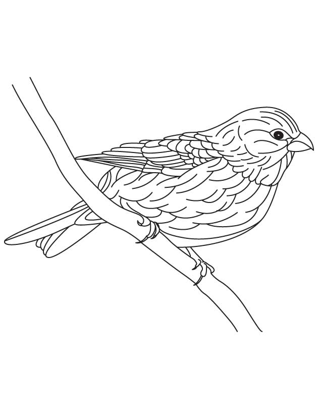 hawfinch bird coloring page